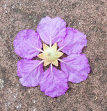 Single violet flower on cement background Royalty Free Stock Images