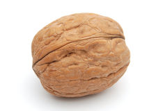 Single walnut Stock Image