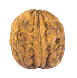 Single walnut isolated on white Stock Photo