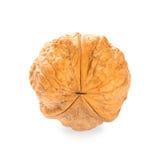 Single walnut Royalty Free Stock Photos