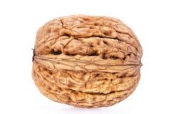 Single walnut isolated on white background Stock Image