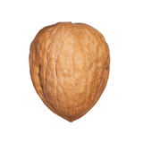 Single walnut in shell isolated Royalty Free Stock Image