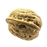 Single walnut  Stock Photography