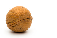 Single walnut on white Royalty Free Stock Images