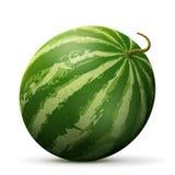 Single watermelon fruit close up Royalty Free Stock Photo