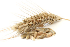 Single wheat spike Stock Photos