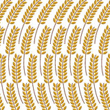 Single wheat spike on the white background. Wheat spike background texture white Royalty Free Stock Images