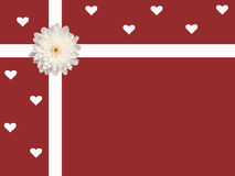 Single white daisy and ribbon with hearts valentine's day card red background Royalty Free Stock Photos
