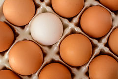 A single white egg surrounded by a number of brown eggs Stock Photo