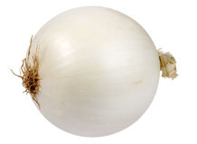 Single a white fresh onion Royalty Free Stock Photography