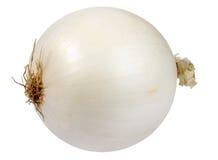 Single a white fresh onion Royalty Free Stock Photography