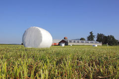 Single White Hay Bale in Field Royalty Free Stock Images