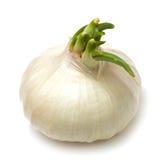 Single white onion Stock Photos