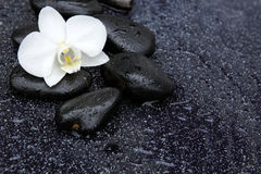 Single white orchid and black stones close up. Royalty Free Stock Images