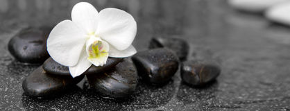 Single white orchid and black stones close up. Stock Image