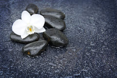 Single white orchid and black stones close up. Stock Photos