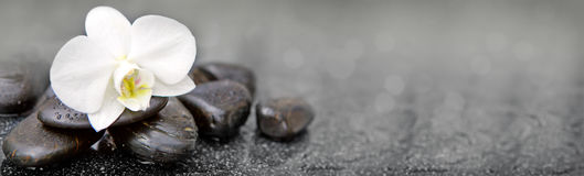 Single white orchid and black stones close up. Royalty Free Stock Photo