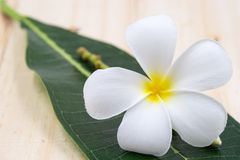 Single white plumeria on wood floors. Royalty Free Stock Photos