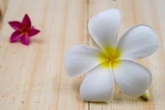 Single white plumeria on wood floors. Single white plumeria on wood floors Stock Photography