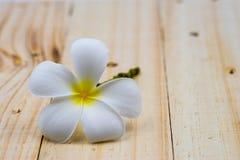 Single white plumeria on wood floors. Single white plumeria on wood floors Stock Image