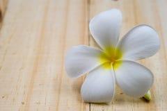 Single white plumeria on wood floors. Single white plumeria on wood floors Stock Images