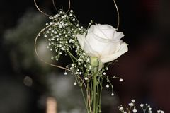 Single White Rose. Beautifully detailed miminimal floral arrangement inspired by classy wedding decor. Baby breadth added with gold touch of stemming to accent Stock Image