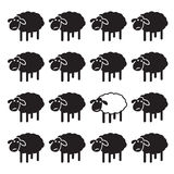 Single white sheep in black sheep group. Stock Photos
