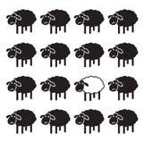 Single white sheep in black sheep group. Stock Photos