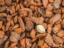 Single white stone between wood chips Royalty Free Stock Photo