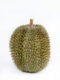Single whole durian Stock Images