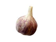 Single whole garlic Royalty Free Stock Images
