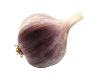 Single whole garlic Stock Photos