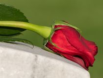 Single Wilted Red Rose on Cemetery Grave Marker. Single wilted red rose macro close-up atop cemetery grave marker Stock Photo