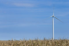 Single wind turbine against blue sky. Single wind turbine rises from behind the corn, horizontal, copyspace left Stock Images