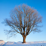 Single winter tree Stock Photo