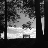 A single wooden bench between trees Stock Images