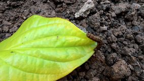 Single worm. Is move on the leave in the garden stock video