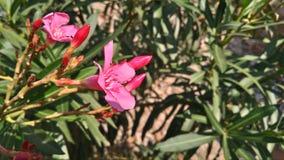 Single& x27; flor de s Imágenes de archivo libres de regalías