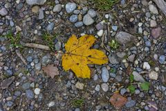 Single yellow autumn leaf top view on forest path. Season Stock Image