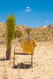 Single Yellow Chair with Plant in California Dese royalty free stock image