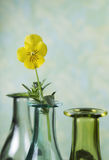 Single Yellow Flower in Vase Stock Image