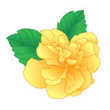 Single yellow flower. On white background, Vector Illustration Royalty Free Stock Photos