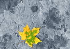 Single yellow leaf Stock Images