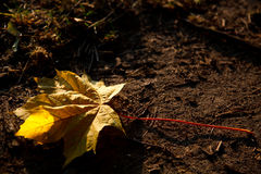 Single yellow leaf on the ground Royalty Free Stock Photo