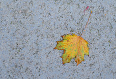 A single yellow leaf on the ground Royalty Free Stock Images