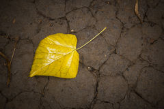 Single yellow leaf Stock Image