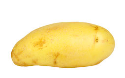 Single yellow raw potato Royalty Free Stock Image
