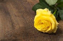 Single yellow rose Royalty Free Stock Photos