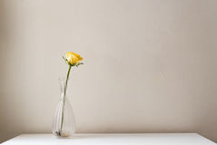 Single yellow rose in glass vase Royalty Free Stock Image