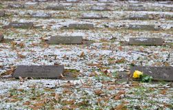 Single yellow rose lying on commemorative stones. Engraved with text at a memorial or monument with a light scattering of snow or frost on the ground in an Royalty Free Stock Photos
